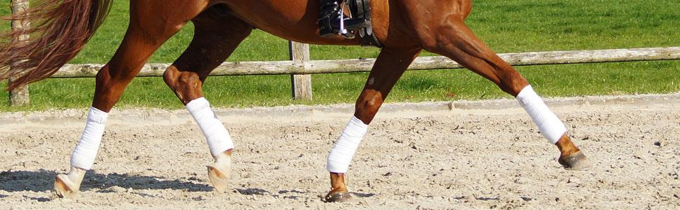 Slideshowbild 2 Beine