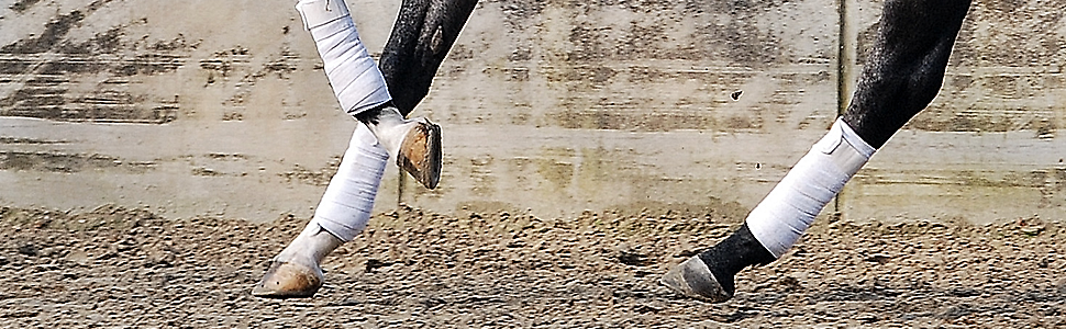 Slideshow Beine
